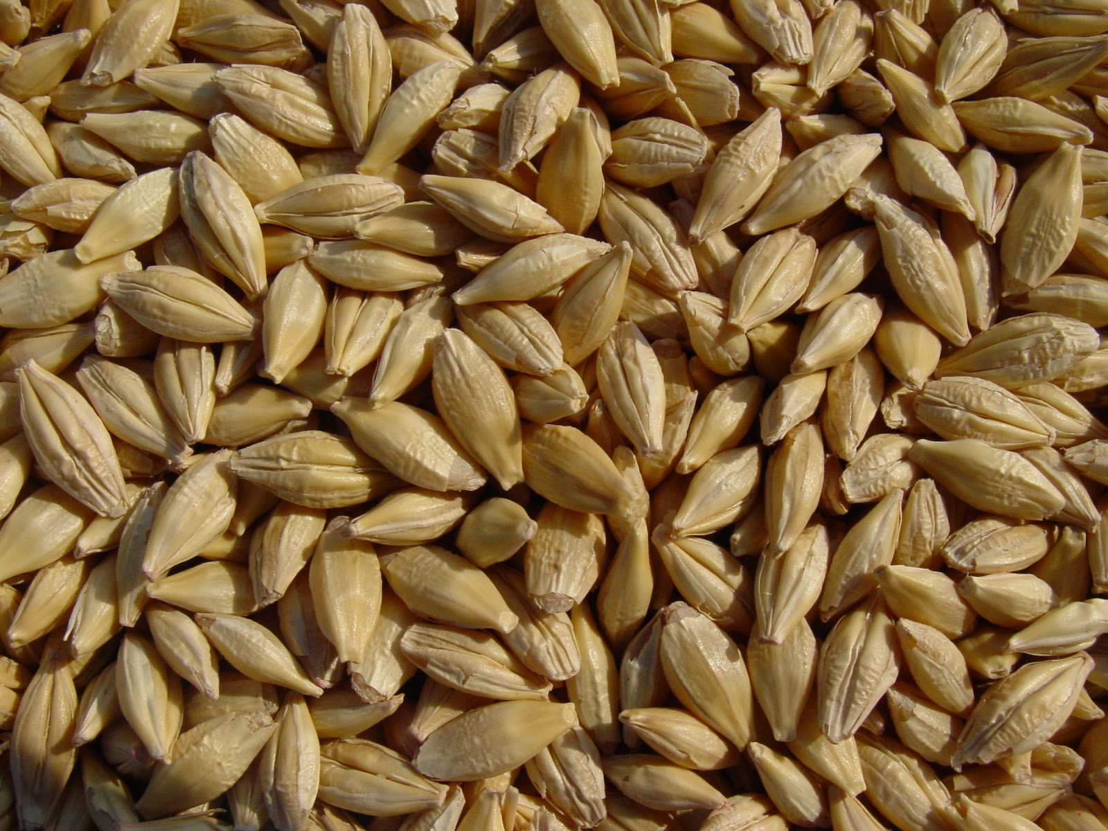 Barley-seeds